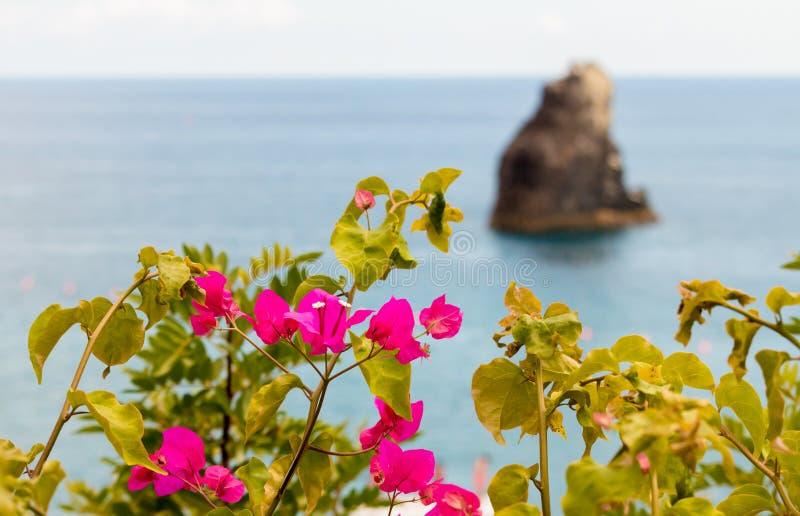Buganvilias &小岛 免版税库存图片