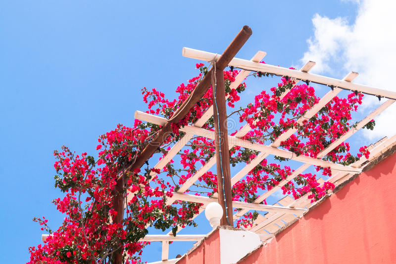 Buganvillas florecientes rosadas con el cielo azul foto de archivo libre de regalías