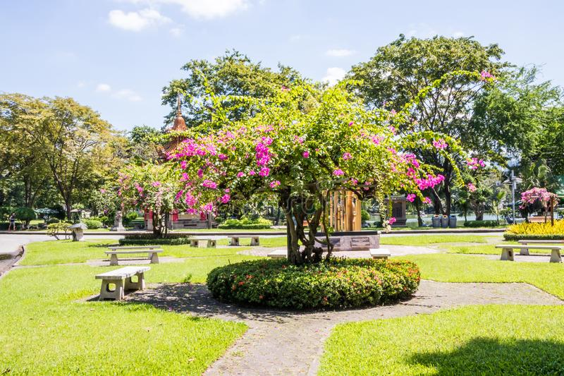 Buganvillea di fioritura nel parco di Lumphini fotografia stock libera da diritti