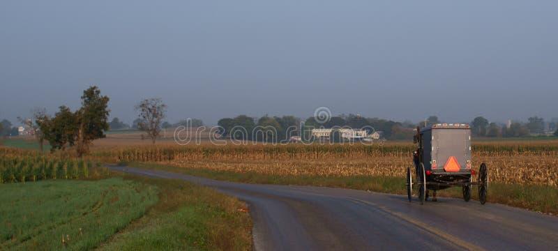 Buggy de Amish da manhã fotos de stock royalty free