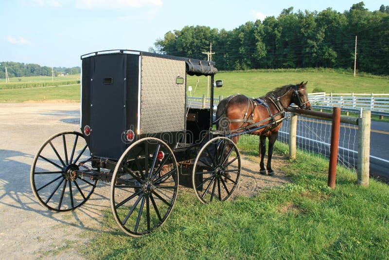 Buggy dei Amish fotografia stock