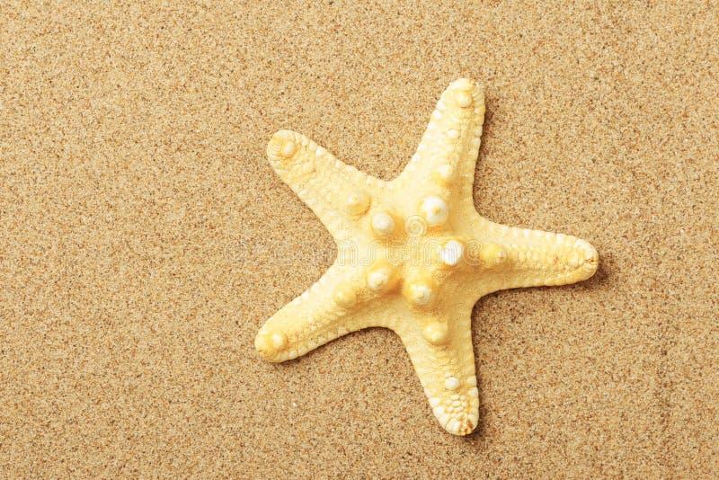Bugia delle stelle marine sul litorale fotografia stock libera da diritti