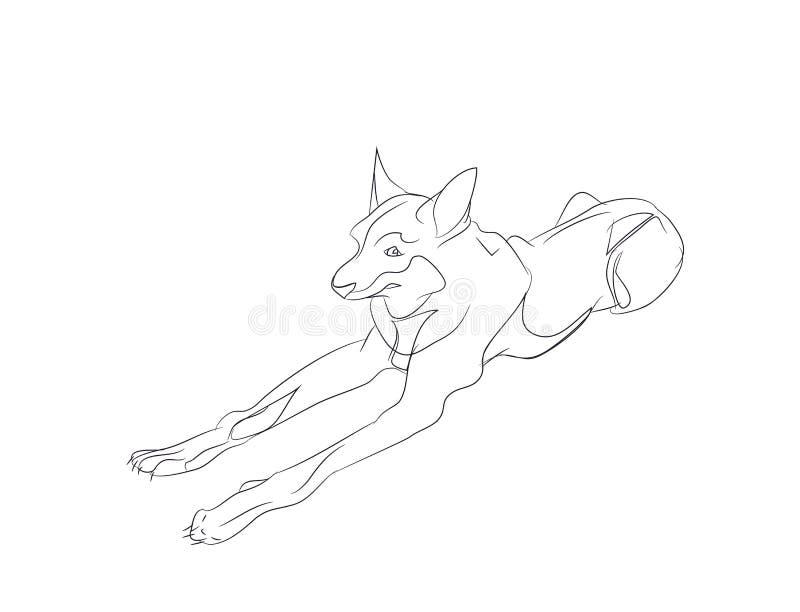 Bugie del cane, linee, vettore, illustrazione di stock