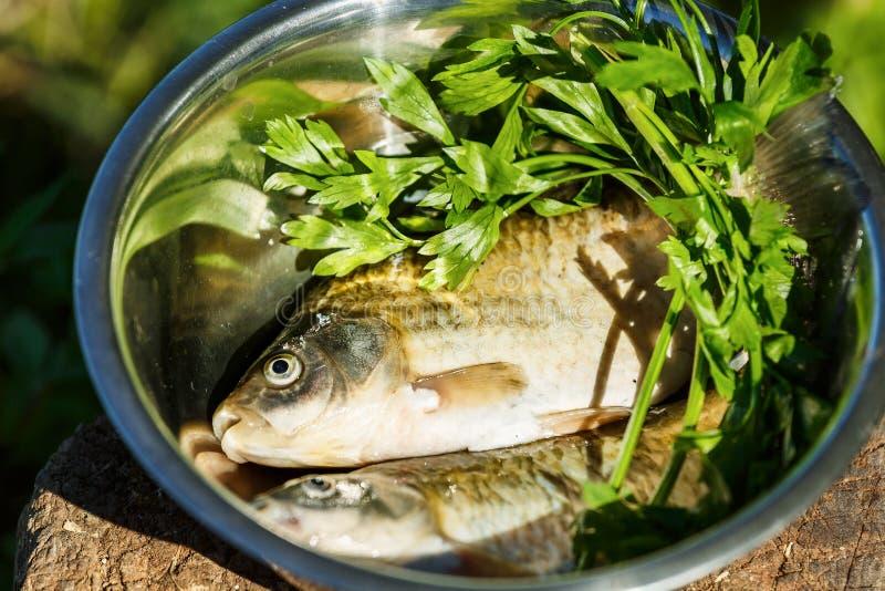 Bugie del prezzemolo e del pesce fresco nel piatto Due pesci fotografie stock libere da diritti