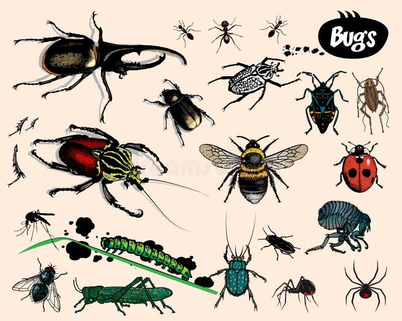 Download Bugs. stock vector. Illustration of jacket, stinger, moth - 11770815