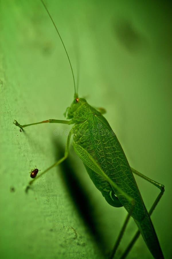 Bugs Free Public Domain Cc0 Image