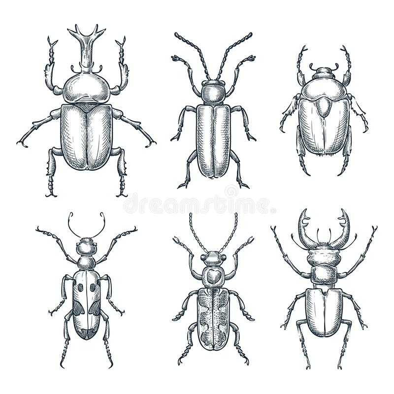 Bugs and beetles set. Vector sketch hand drawn illustration. Insects collection isolated on white background.  vector illustration