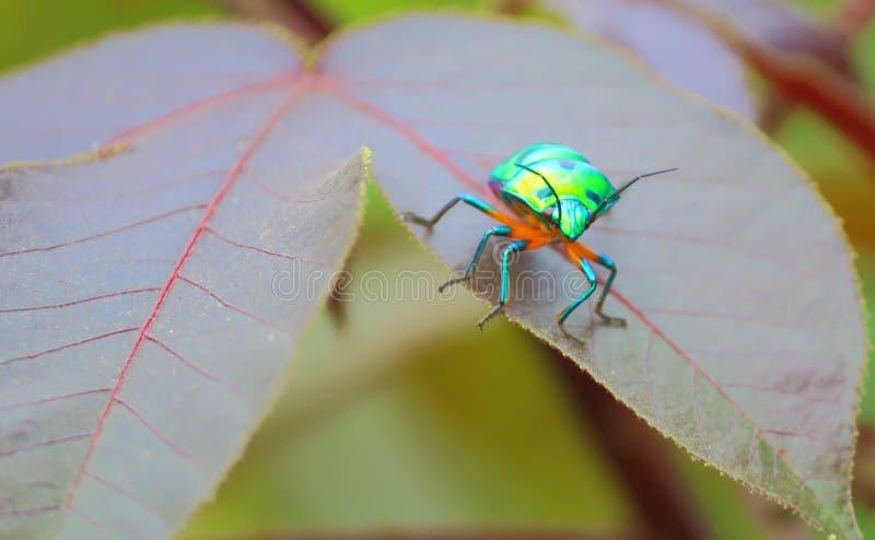 Bugs stock photography