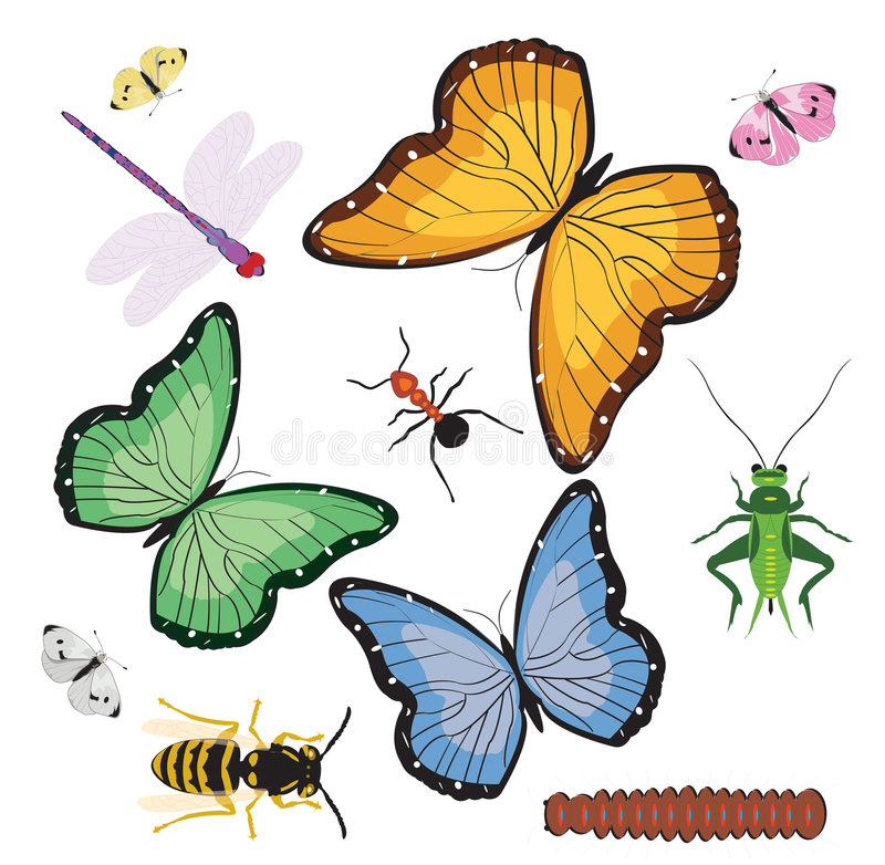 Bugs & Butterflies royalty free illustration