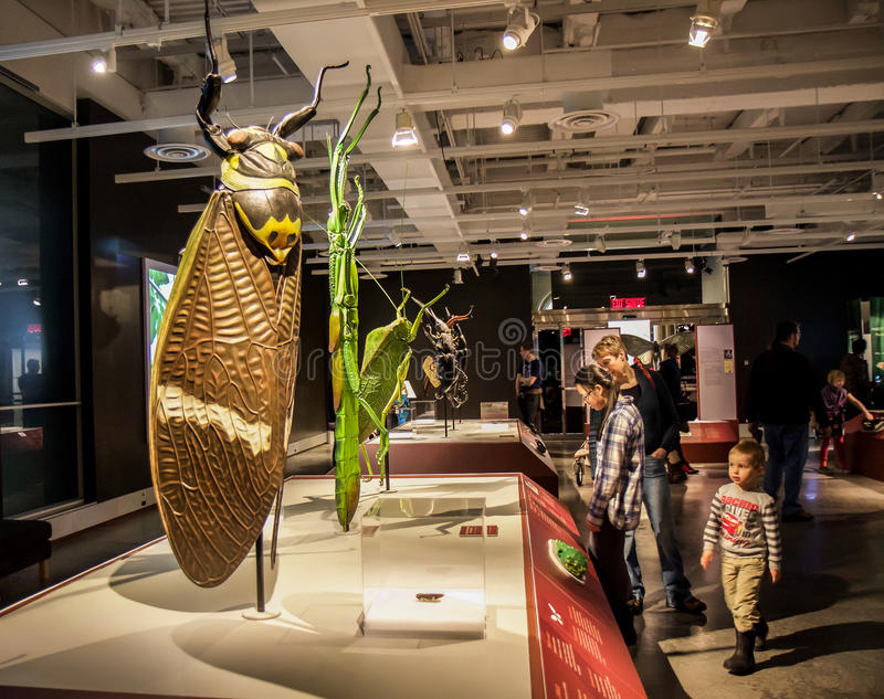 Bugs exhibition. In Ottawa Canadian Nature Museum, giant imitation of bugs and insects. Things to learn for all the family royalty free stock photos