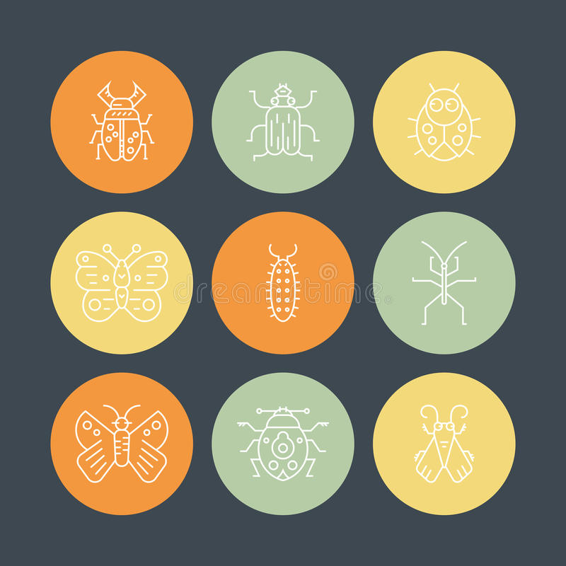 Bugs & Insects. Collection of insects made in thin line vector style. Bug symbols, nature elements.n vector illustration