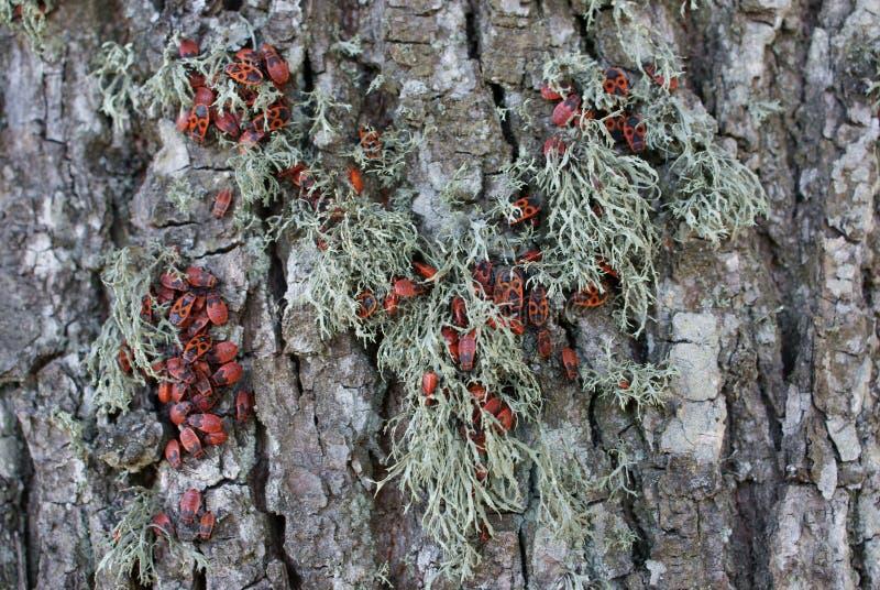 Bugs jam on the tree stock photo