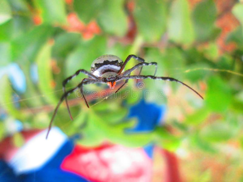 bugs livstid royaltyfria foton