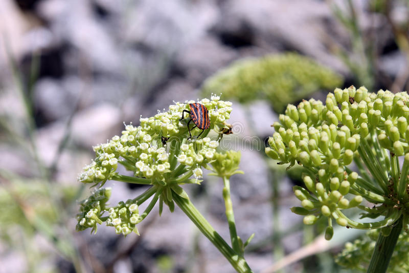 bugs livstid arkivbild