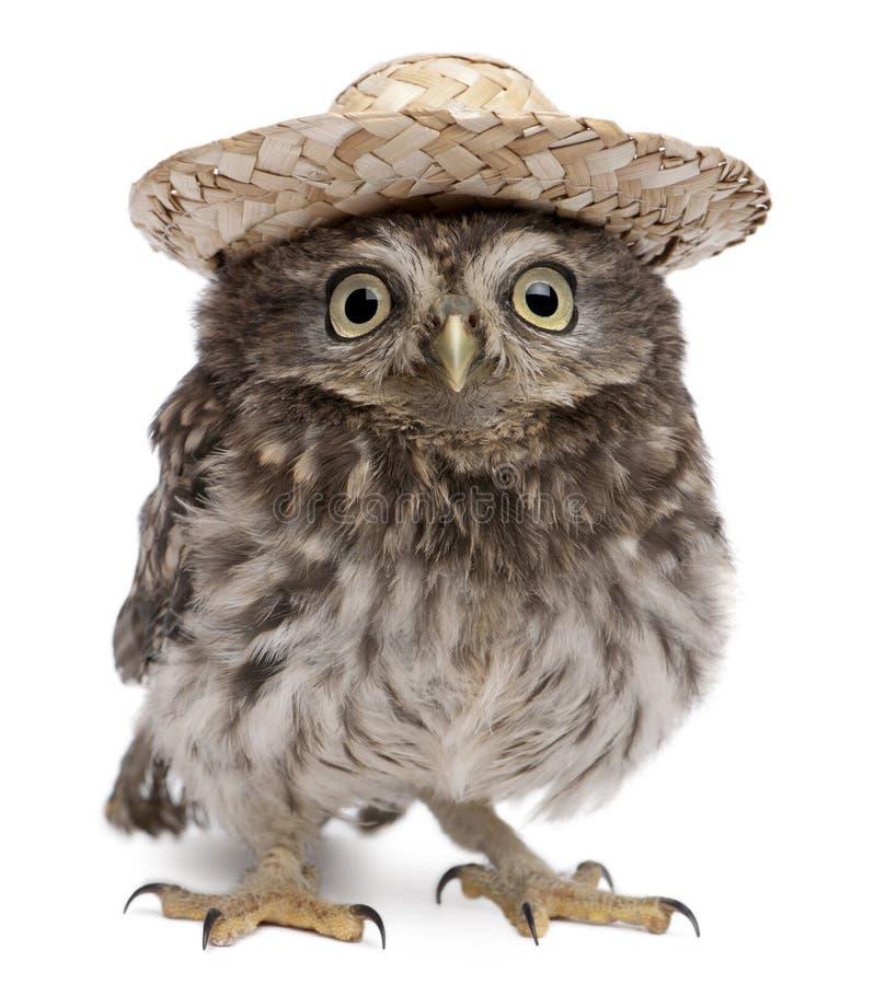 Buho joven que desgasta un sombrero fotografía de archivo libre de regalías