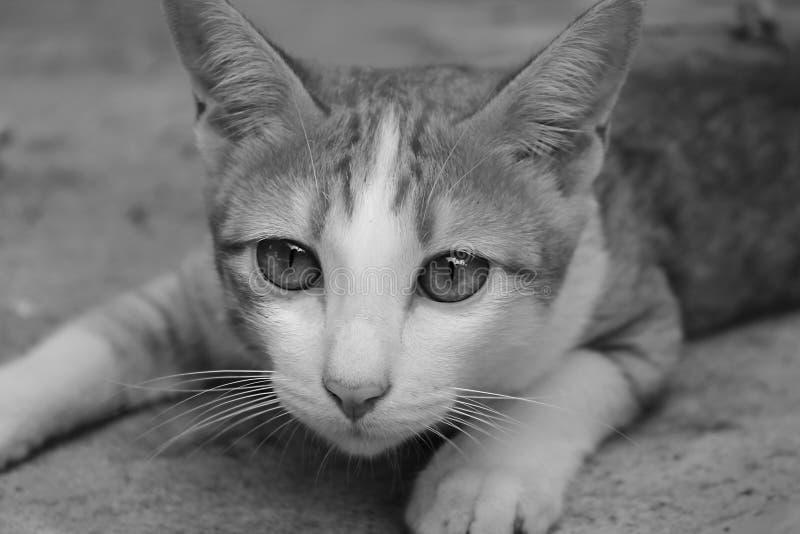 Buigende Kat stock afbeeldingen