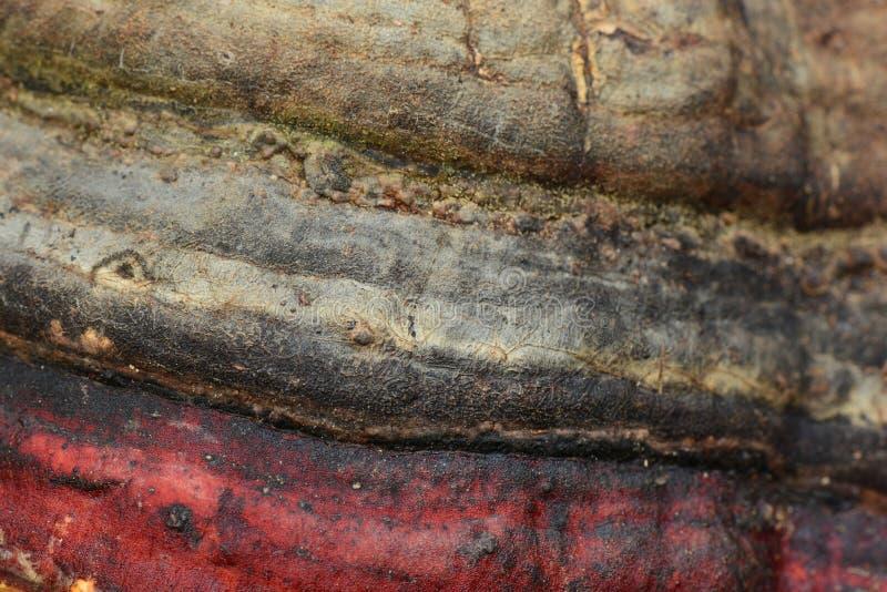 buigende lijnen van berkpaddestoel royalty-vrije stock afbeelding