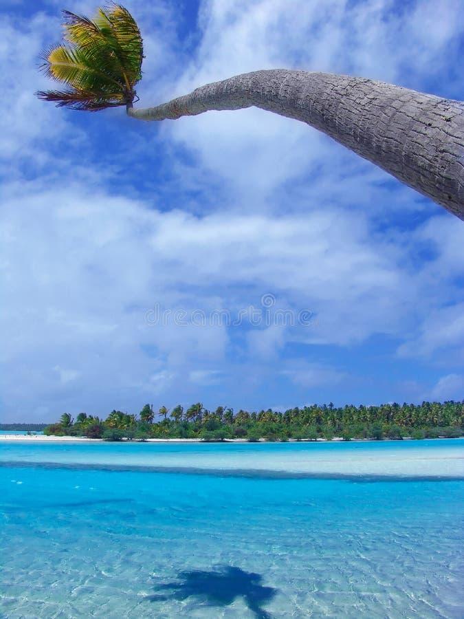 Buigende Palm royalty-vrije stock foto