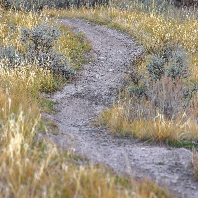 Buigende wandelingssleep amid grassen in de Vallei van Utah royalty-vrije stock foto's