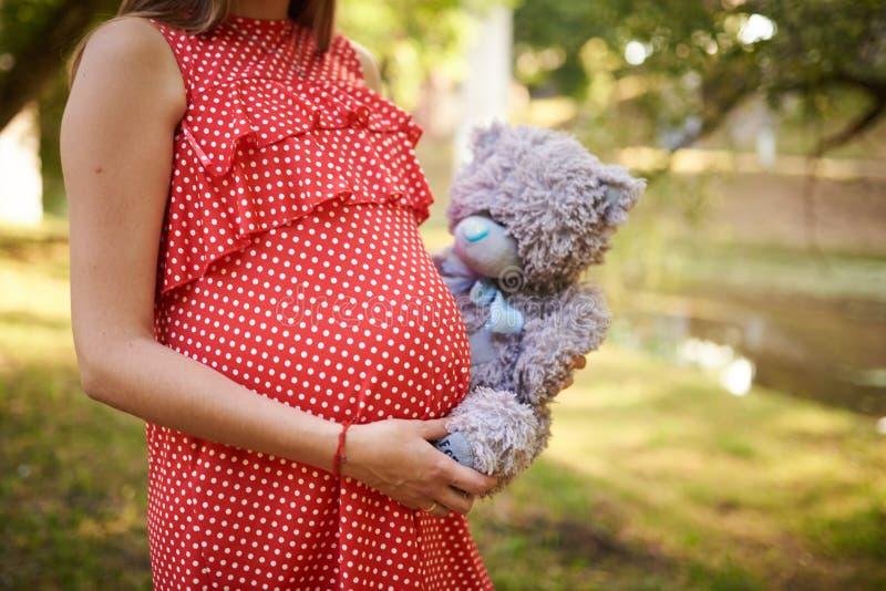 Buik van een zwangere vrouw, in rood in een witte stipkleding, met zijn die handen op het, in de handen van een teddybeer worden  stock foto