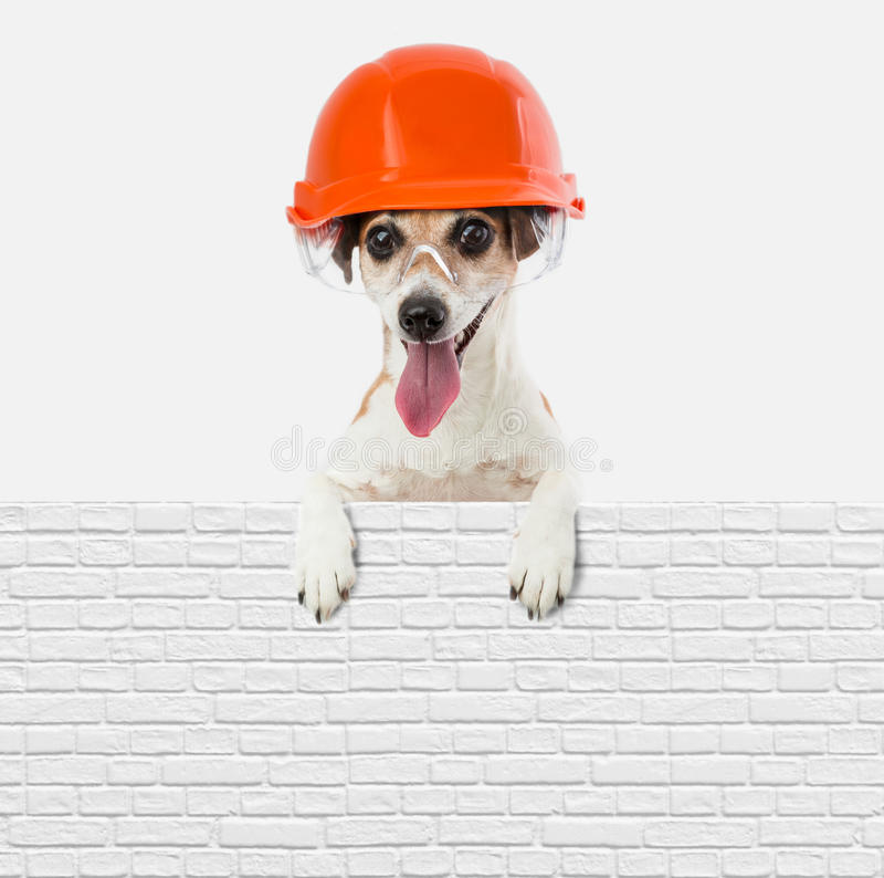 Builder making brick wall brickwork. Dog jack russell terrier builder worker brickwork peeping. Place for your text to insert information stock images
