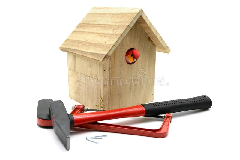 Building bird nesting box with hammer, nails and saw. Bird looking out of nestbox. white isolated background stock photo