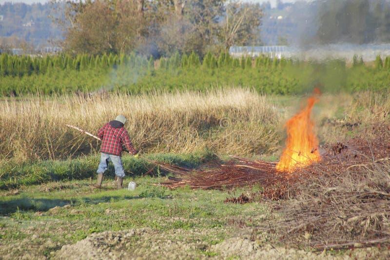 Building a Bonfire stock images