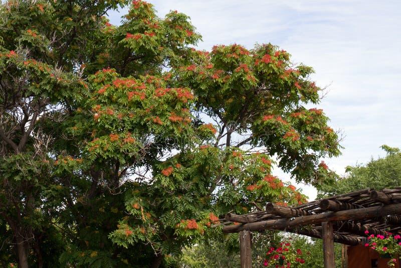 Download Building ornate 库存图片. 图片 包括有 墨西哥, 状态, 蓝色, 天空, 橙色, 线索 - 59100329