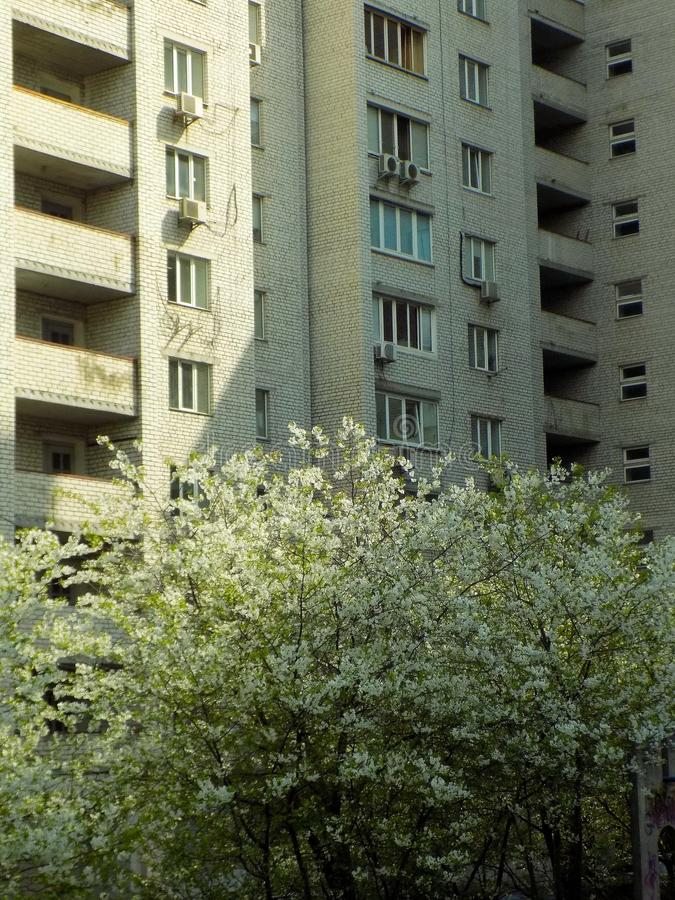 Building, Urban Area, Residential Area, Tree stock photo