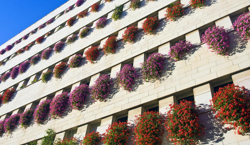 Building wall with flowers. A wall of a modern building decorated with live flowers on every windowsill royalty free stock image