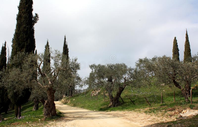 Garden with old olives tree and cypress in monastery Hilandar on the Holy Mountain royalty free stock photography