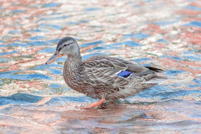 Buis in Pinky Blue-feewater royalty-vrije stock afbeeldingen