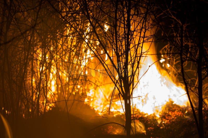 Buisson brûlant la nuit photographie stock