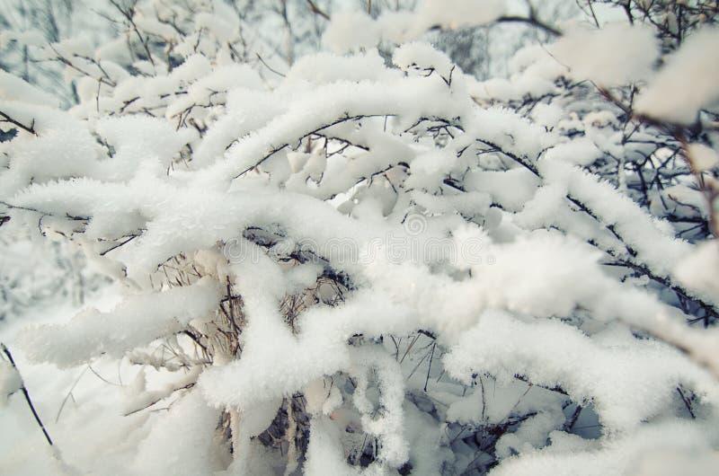 Buisson congelé d'hiver images stock