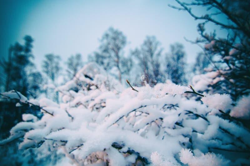 Buisson congelé d'hiver photo stock