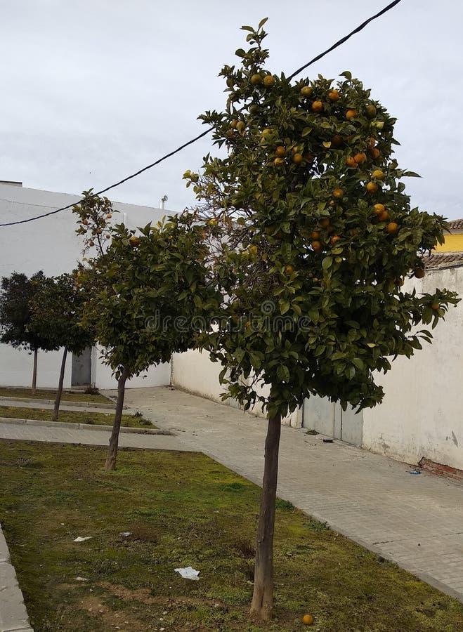 Buisson décoratif gentil dans un jardin photographie stock libre de droits