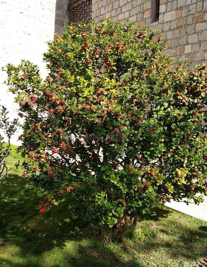 Buisson décoratif gentil dans un jardin image libre de droits