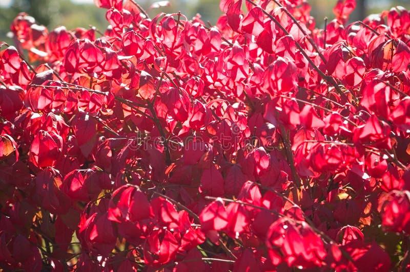 Buisson d'automne image libre de droits