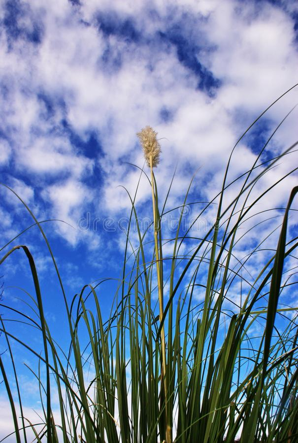 Buisson de vert d'angle faible contre le ciel images libres de droits