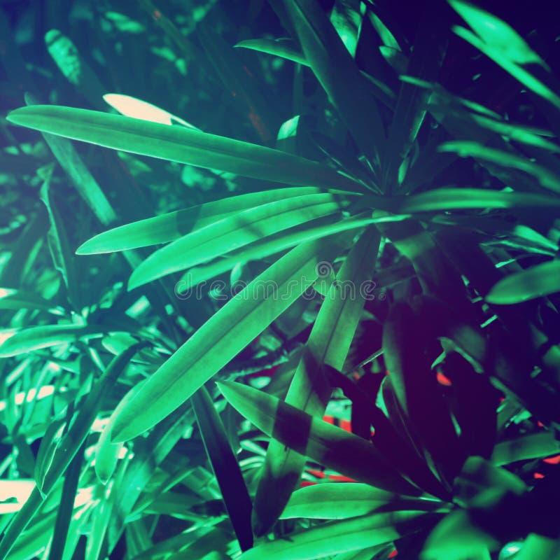 Buisson exotique sous le ciel nocturne photos libres de droits