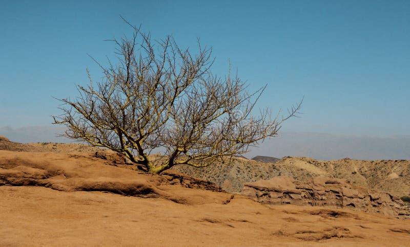 Buisson isolé dans le désert en Argentine photo stock