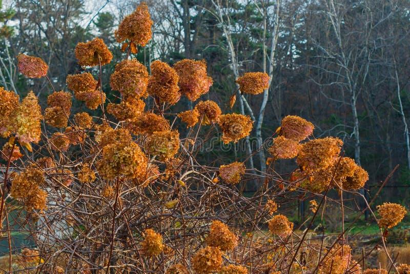 Buisson jaune d'automne image stock