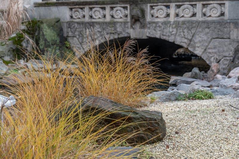 Buisson jaune lumineux de longue usine d'herbe près de grande roche grise avec le fond brouillé du pont en pierre fleuri Concepti images libres de droits