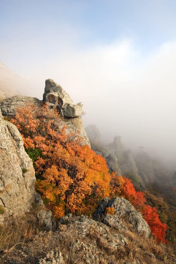 Buisson orange lumineux dans les roches, montagnes. Crimea.Fog. photo stock