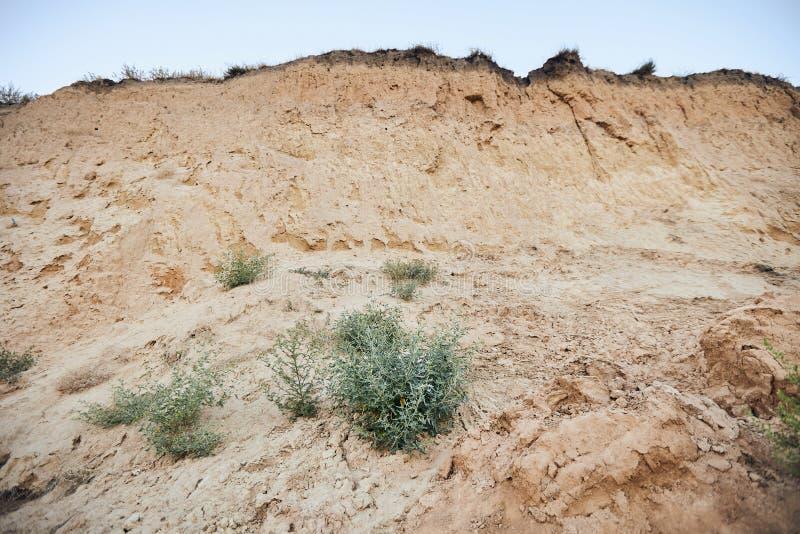 Buisson vert au milieu d'une dune ? sable jaune photo libre de droits