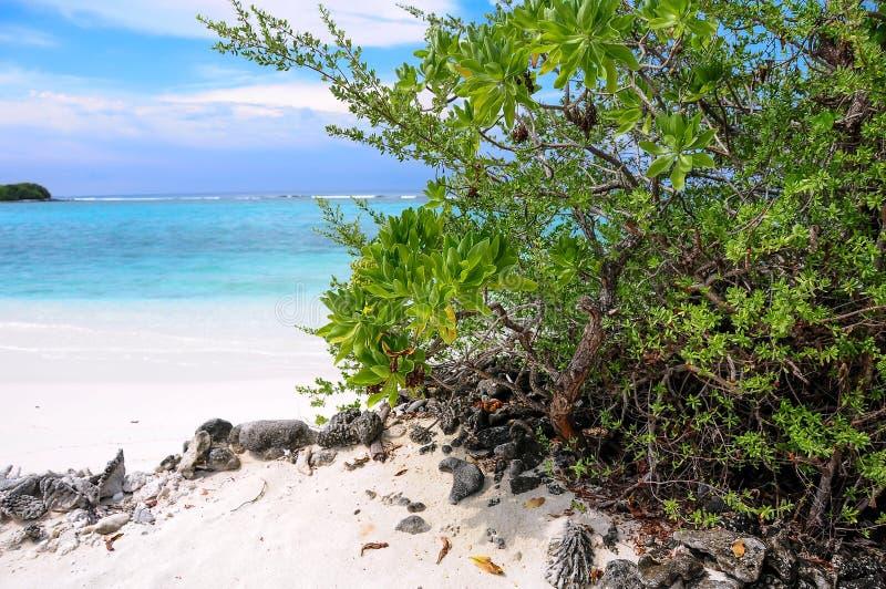 Buisson vert tropical sur la plage sablonneuse blanche et la lagune bleue photos stock