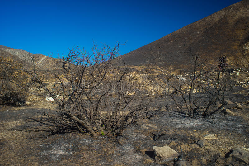 Buissons brûlés en collines de la Californie photographie stock libre de droits