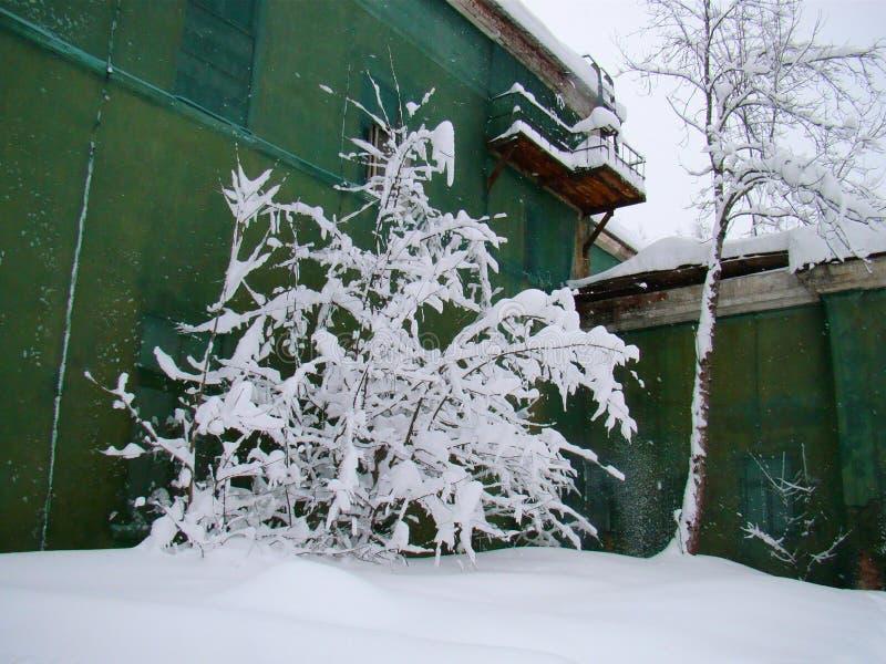 Buissons couverts de neige image stock