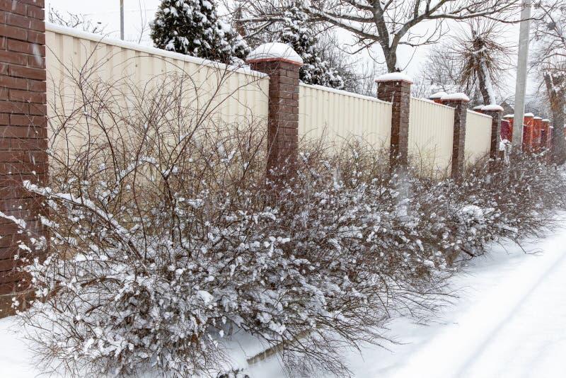 Buissons couverts de neige le long de la barrière photo stock