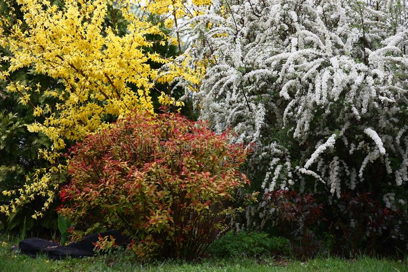 Buissons décoratifs lumineux photo libre de droits